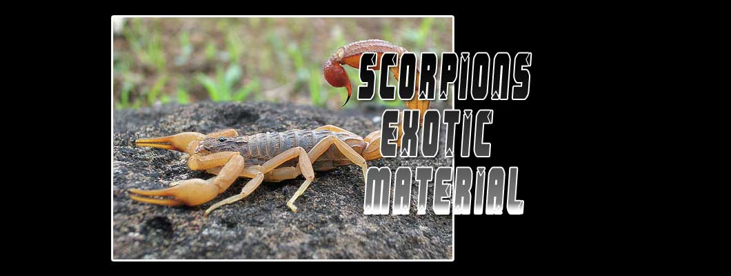 Real Scorpions Exotic Material